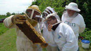 Bluson apicultor