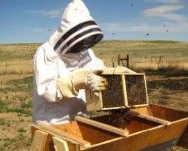 La mejor época para empezar en apicultura