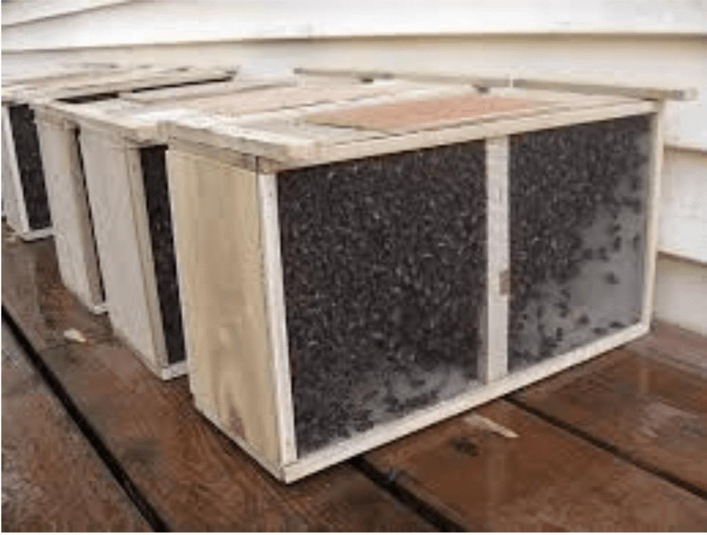 paquete de abeja