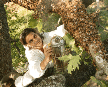 Cómo cazar un enjambre de abejas
