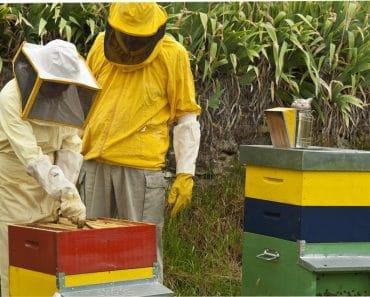 ¿Cómo ser apicultor? Inicios en apicultura (Parte I)