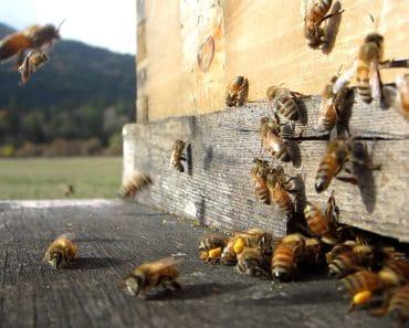 Cómo revisar una colmena de abejas