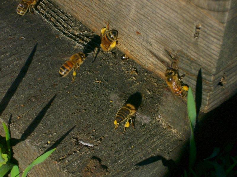 polen-volviendo