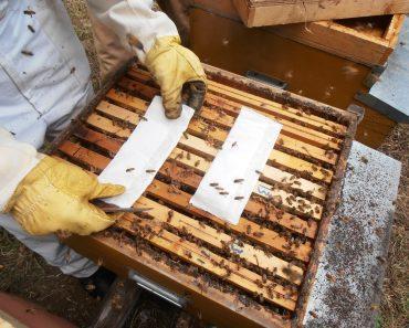 Como tratar la varroa con ácido fórmico