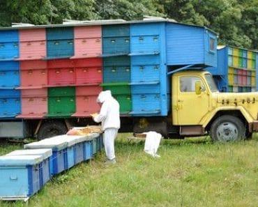 Cómo hacerse apicultor aficionado: trámites legales y burocracia