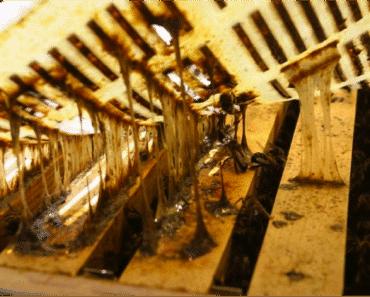 El própoleo: recolección y preparación de tintura de própoleo casera