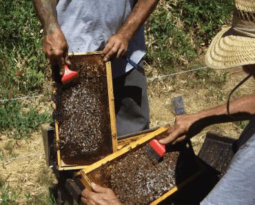 Rasca la cría: Método contra varroa. Cómo, pros y contras.