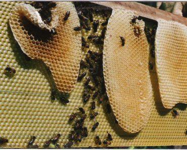 CERAS: Calidad y efecto sobre la salud de las abejas