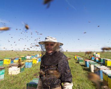 Monitorización de colmenas: Como, cuando y que parámetros controlar