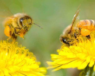 ¿Qué es la polinización? El papel de las abejas en la polinización