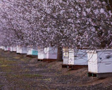 La polinización: un servicio profesional para apicultores