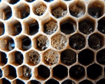 La humedad de la miel: Por qué fermenta y como evitarlo.