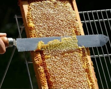 Fases en la Cosecha de la miel: La Desoperculación