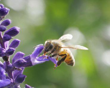 Botánica apícola: Introducción y listado de plantas visitadas por las abejas
